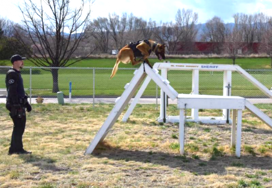 Brown dog climbing white obstacle course